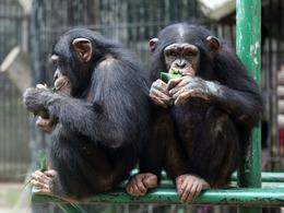 动物过端午节 卖萌吃粽子