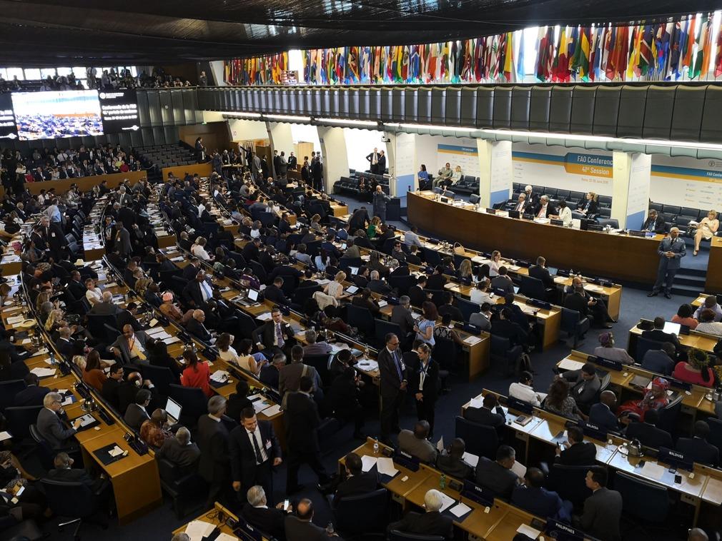 联合国粮农组织选出首个中国籍总干事[图集]